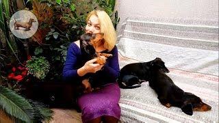 Такса & Собака: 🐶 Таксы в доме: Отношение таксы к растениям! Поведение таксы когда дома растения :))