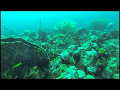 Diving in barbados