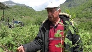 Հատապտուղների այգի հիմնած գյուղատնտեսը ակնկալում է կառավարության աջակցությունը