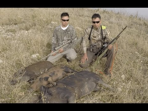 caceria-de-puercos-salvaje-🐗🐗🐗-hunting-wild-pigs-caceria-de-marranos-javalines-puercos-cerdos