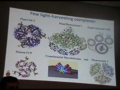 Design Principles in Photosynthetic Light Harvesting: Introductory Concepts - Tjaart Krüger