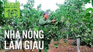 Kỹ thuật trồng cây ăn quả theo hướng hữu cơ | VTC16