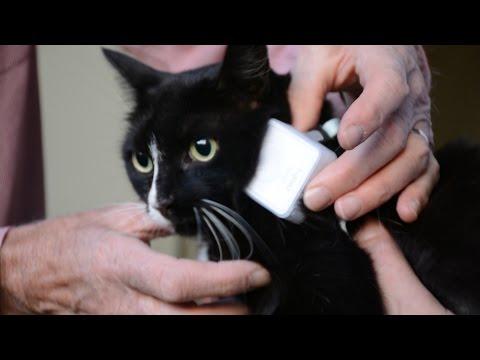 Secret lives of cats