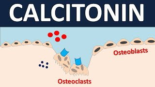 Calcitonin For Bone Disorders    Osteoporosis & Paget's Disease