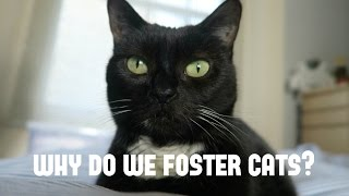 Fostering for Cat's Protection!