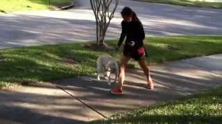 Alpha 1 K9 - Jacksonville's Best Dog Training Team Call Us Today 727 623 8617