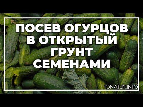 Посев огурцов в открытый грунт семенами | toNature.Info