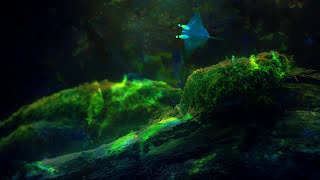 TIS 7.37: ASMR Sleeping pill (3D sound) | ТИС: АСМР установка на сон (3Д звук) + ear to ear