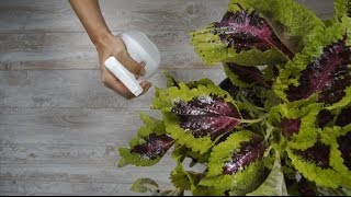 3 Easy DIY Ways to Rescue Your Dying Houseplants