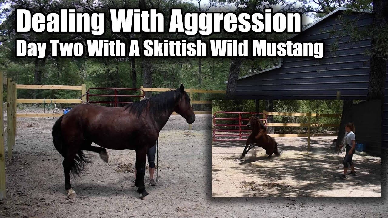 Dealing with Aggression | Day Two With a Skittish Wild Mustang | Brutus