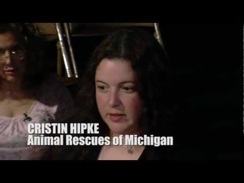 DOGS of DETROIT An Open Forum PART 2 from the documentary project American Strays