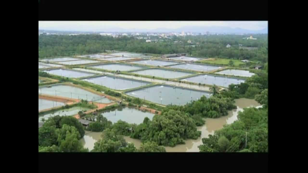 Thailand shrimp industries 001.mp4