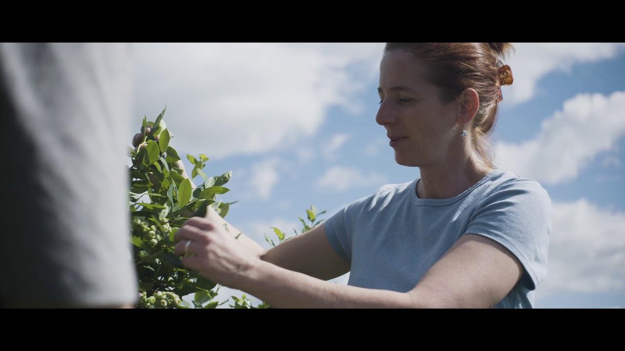 Baccalauréat en agronomie