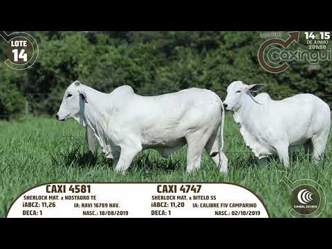 LOTE 14   CAXI 4581, CAXI 4747