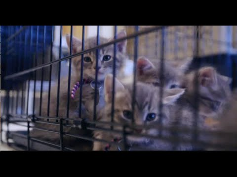 Yes, it's Kitten Bowl V Time! Learn how to adopt one of the