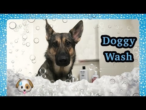 How to Wash a dog - Featuring my German Shepherd