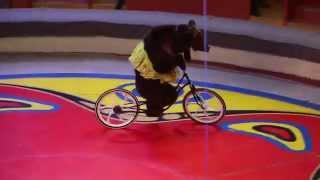 Ехали медведи на велосипеде [на самом деле ДА](Цирк Филатовых., 2015-04-06T04:39:35.000Z)