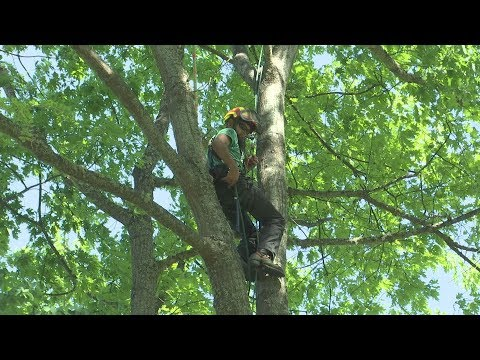 Local arborists reach for success at Southern Oregon Regional Tree