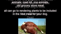 Commercial Dog Food Exposed