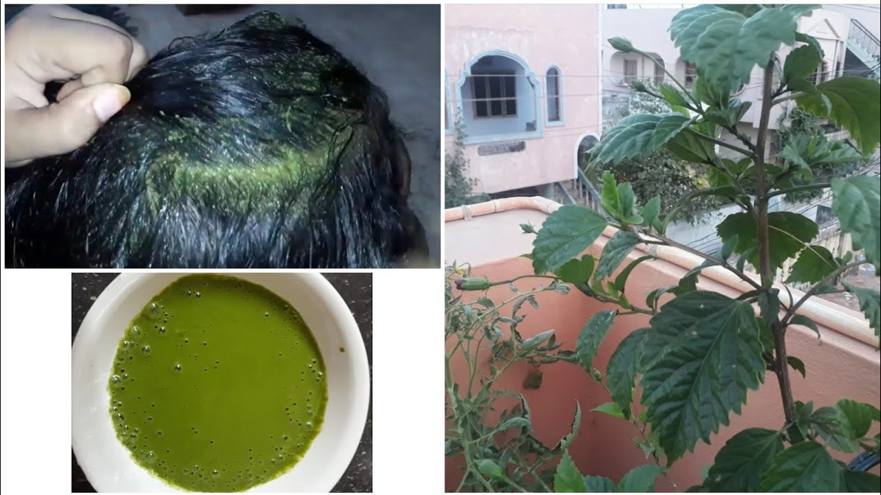 Hair Growth With Hibiscus Leaves And Stop Hair Loss Youtube