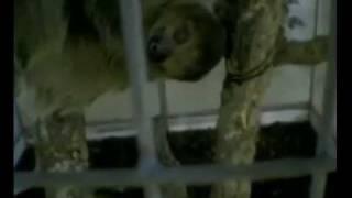 Tierleid Zoohandel: Verdeckte Ermittlungen zeigen grausame Realität (Peta)