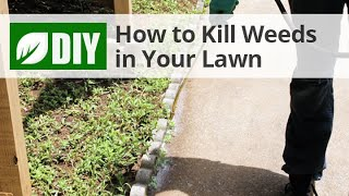 How to Control Weeds in Your Lawn