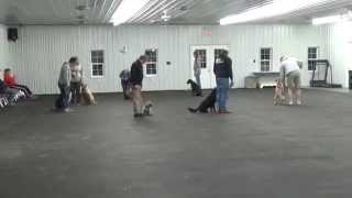 World Class Dog Kennels, Group Dog Training, Chicago Il.