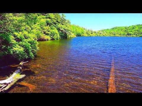 4k 癒し自然映像 絶景 初夏の白駒池 北八ヶ岳 標高2,115m Japan Nature Relaxation Movie Summer Yatsugatake