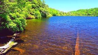 4k Japan Nature Healing Relaxation 癒し自然映像 絶景 初夏の白駒池 北八ヶ岳 標高2,115m Summer Shirakomaike Yatsugatake