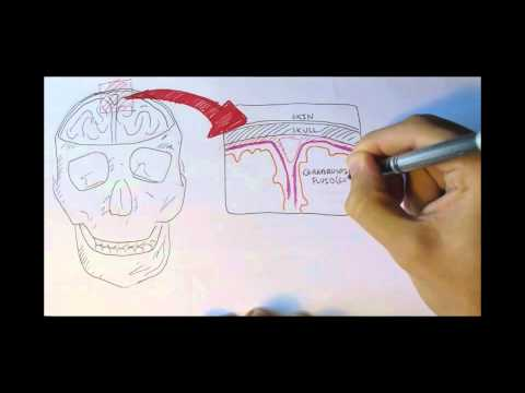 Neurology - Physiology Overview