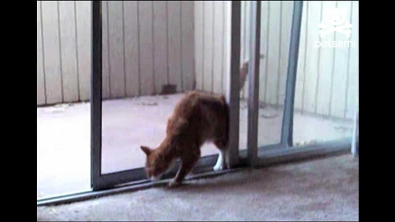 Cat Open Screen Door Youtube