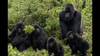 Mój film zwierzeta afryki