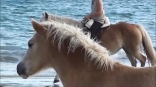 Gioia, découverte de la plage