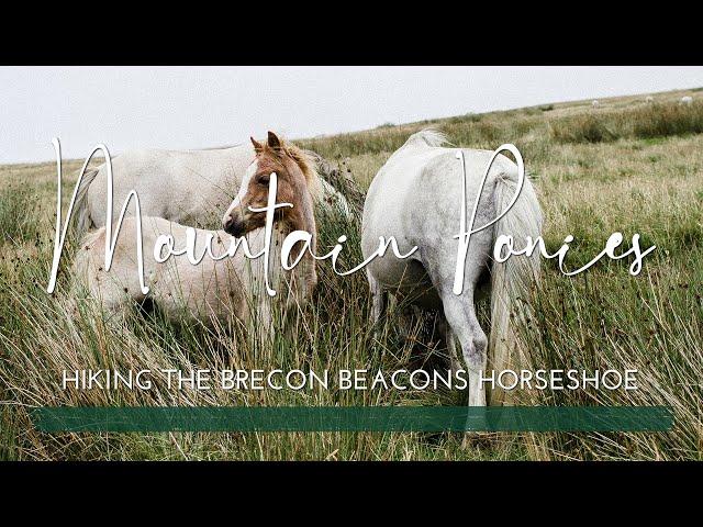 Welsh Mountain Ponies   Brecon Beacons Horseshoe Ridge Walk   South Wales   Peaceful Mountain Walk