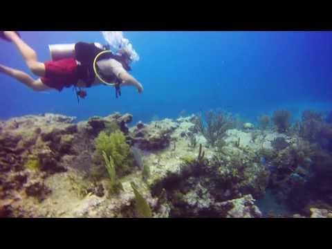 Molasses Reef Dive