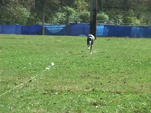 UKC Lure Coursing