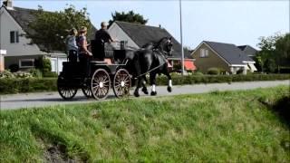 Продается пара фризских лошадей!!!