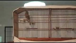 Repeat youtube video Buriti Máquina e Fliper : o mais rápido X o incomparável (parte 1)