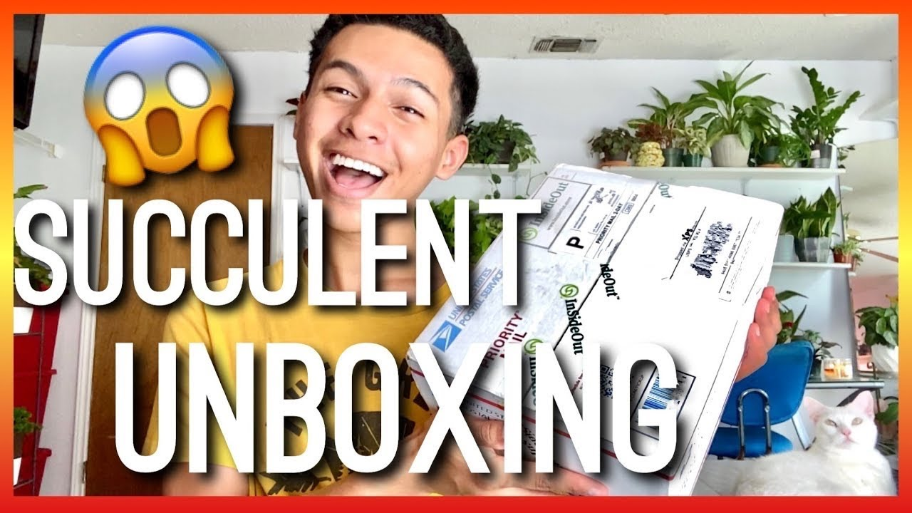 Inside Out Succulent Plant Unboxing! Succulent Haul from Inside Out