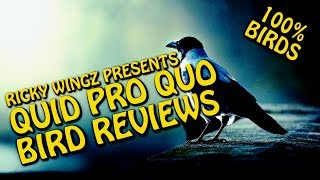 RICKY WINGZ PRESENTS: Quid Quo Pro Bird Reviews