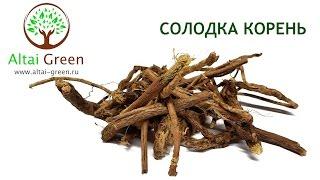 Солодка - применение корня солодки.