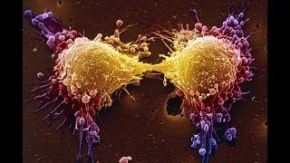 Como o câncer se desenvolve