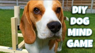DIY Cheap and Easy To Make DOG TOY | Louie The Beagle