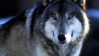 волк (я объявляю вам войну) Макс Леонидов