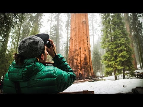 THE BIGGEST TREE ON EARTH - General Sherman in Sequoia National Park