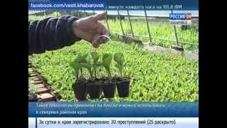Вести-Хабаровск. Новые технологии выращивания рассады