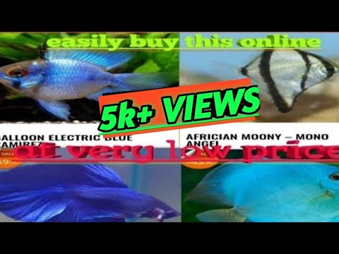 How To Buy Aquarium Fishes Online In India||true Website||100% Working Process||online Fish Shopping