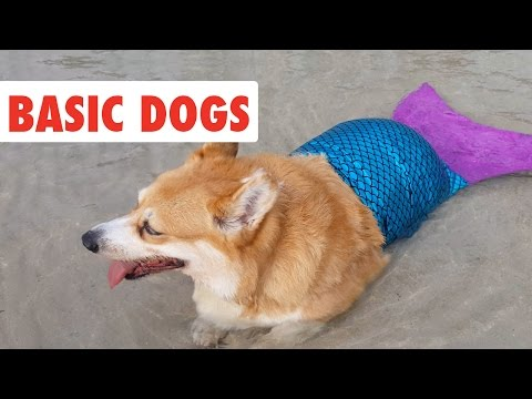 Basic Dogs | Funny Dog Video Compilation 2017