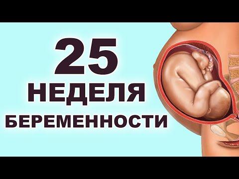 Что происходит с мамой и ребенком на 25 неделе беременности?