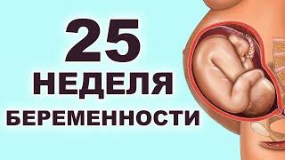 Что происходит с мамой и ребенком на 25 неделе беременности? 6 месяц беременности. Второй триместр.